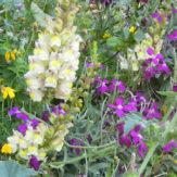 ゴゾの春を彩る野生の花々