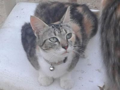 brangelina-cat