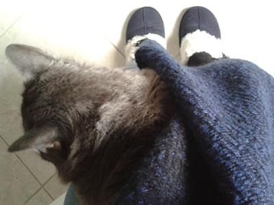 ボアのスリッパ、猫、ひざ掛けが必須。