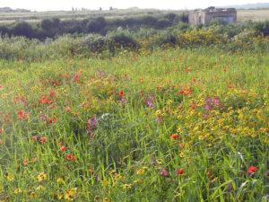 サナットの草原