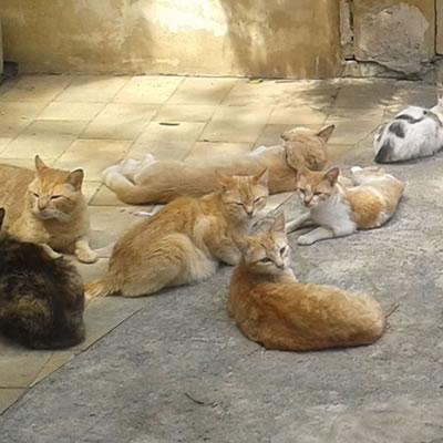 ゴゾ島ネコ歩きマップ